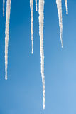 Big Icicles on the roof against a blue sky Stock Photography