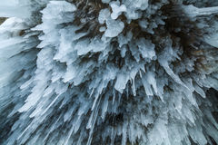 Icicles on the shore of Lake Baikal. Royalty Free Stock Photography