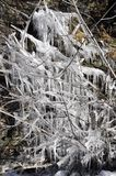 Icicles on a shrub Royalty Free Stock Photo