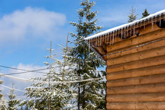 Icicles and snow on an old wooden cottage. Near the woods Stock Image