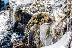 Icicles on Timberline Falls waterfall Royalty Free Stock Photo