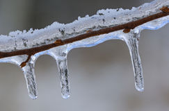 Icicles on Twig Stock Photos
