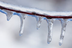 Icicles on Twig Royalty Free Stock Photo