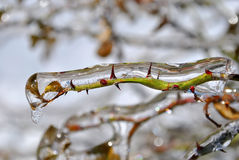 Icicles on twig after freezing rain Stock Photography