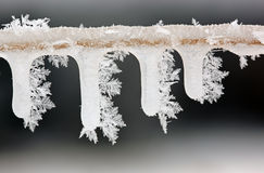 Icicles on Twig with Hoarfrost Royalty Free Stock Photos