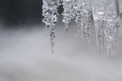 Icicles on the water. Royalty Free Stock Photo