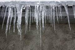 Icicles in the winter Royalty Free Stock Images