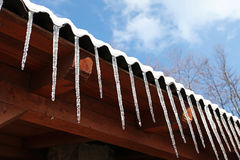 Icicles in winter sun Stock Image