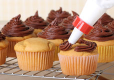 Icing Cup Cakes Stock Images