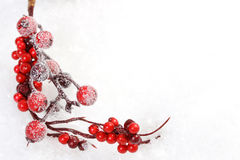 Icing pine branch and branch with red rowanberries and gift box with snowflakes and christmas trees and reindeerw and red matt bow Stock Photography
