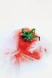 Icing Tomato Stock Photos