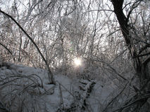 Icing up branches. A sun lights through the icing up branches of trees Royalty Free Stock Images