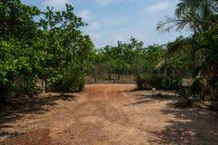 Icke-asfalt väg till skogen Royaltyfri Bild