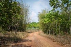 Icke-asfalt väg till skogen Royaltyfria Bilder