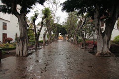 Icod de los Vignos in the rain Royalty Free Stock Photos