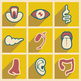 Icon of assembly internal organs in flat style Stock Images