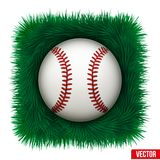 Icon Baseball ball in green grass. Vector Stock Photos