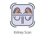 Icon design kidney scan in flat line style. Symbol about health check up and medical concept Royalty Free Stock Image