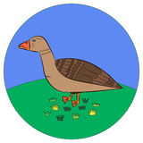 Icon duck. Walks on the grass Stock Photo