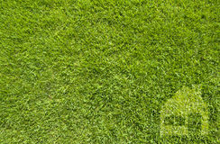 Icon home on green grass Stock Photos