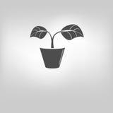 icon leaf symbol Stock Photo