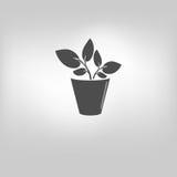 icon leaf symbol Stock Image