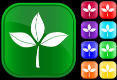 Icon of leaves. On shiny square buttons Vector Illustration