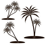 Icon palm tree Royalty Free Stock Photography