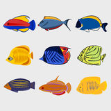 Icon reef fish set. Reef fish icon set on white background, vector illustration Stock Image