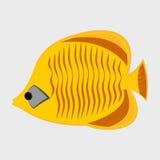 Icon reef fish. Icon reef fish  on white background Royalty Free Stock Photos