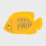 Icon reef fish. Icon reef fish  on white background Royalty Free Stock Photography