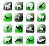 Icon set african animals. Stylized icons set with reflections and shadows Stock Image