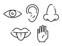 Icon set of the five human senses. Simple, minimal line icons illustration. stock illustration