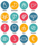 Icon Set of Human Organs. Vector Icon Set of Human Organs Stock Images