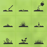 Icon set stages of how to grow a plant from seeds. Stock Photography