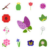 Icon set on a white background. Vector lilac, . Icons set flower Royalty Free Stock Image