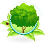 Icon with Tree Royalty Free Stock Image