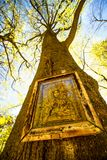 Icon on a tree in Poland Royalty Free Stock Images