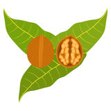 Icon walnuts. Flat design, illustration stock illustration