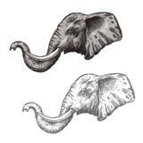 Icona africana di schizzo di vettore dell'animale selvatico dell'elefante illustrazione di stock