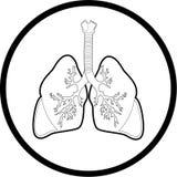 Icona dei polmoni di vettore Immagine Stock