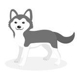 Icona del cane della razza del husky, piana, stile del fumetto Cucciolo sveglio isolato su priorità bassa bianca Illustrazione di royalty illustrazione gratis