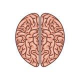Icona del cervello umano Immagine Stock
