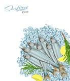 Icona del pesce di vettore di schizzo dello spratto Spratti marini isolati dell'Oceano Atlantico con i rosmarini ed il limone sui Fotografia Stock Libera da Diritti