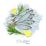 Icona del pesce di vettore di schizzo dello spratto Spratti marini isolati dell'Oceano Atlantico con i rosmarini ed il limone sui Fotografia Stock