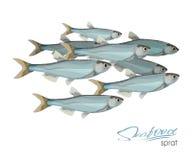 Icona del pesce di vettore di schizzo dello spratto Spratti marini isolati dell'Oceano Atlantico Simbolo isolato per il segno del Immagini Stock