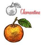 Icona del taglio degli agrumi di schizzo di vettore della clementina royalty illustrazione gratis