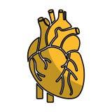 Icona dell'essere umano dell'organo del cuore royalty illustrazione gratis