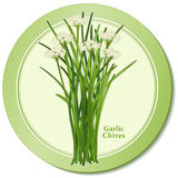 Icona della erba cipollina di aglio Immagini Stock Libere da Diritti