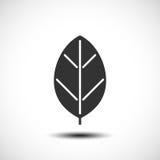 Icona della foglia Concetto di Eco Immagine Stock